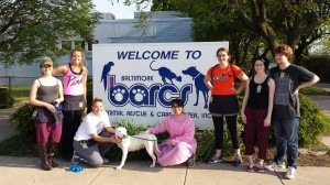 UMBC Service-Learners at BARCS, Spring 2014